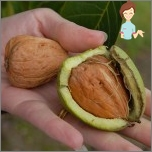 Traditional recipes against hair growth on the body - walnut
