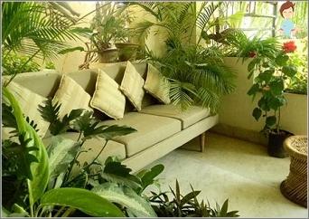 Choose hardy plants