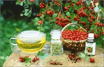 Hawthorn during pregnancy: indications and contraindications
