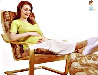 Kas padeda pašalinti mėšlungį veršeliams nėštumo metu?