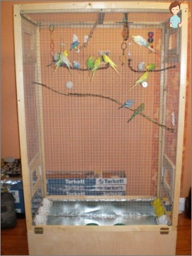 Features of care for parrots
