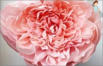 الزهور من الورق المموج: كيفية جعل كيفية اختيار المواد، ما هي ميزاتها؟