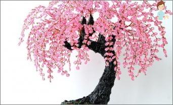 Unterkunft auf die Kunst des Ostens: den Bonsai-Baum selbst zu Hause machen