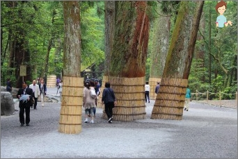 كيفية جعل حزام الماشية لحماية الأشجار؟