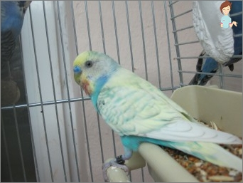 Parrot care features