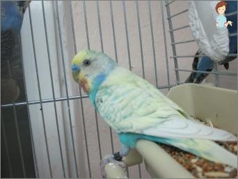 Papagei-Pflege-Funktionen